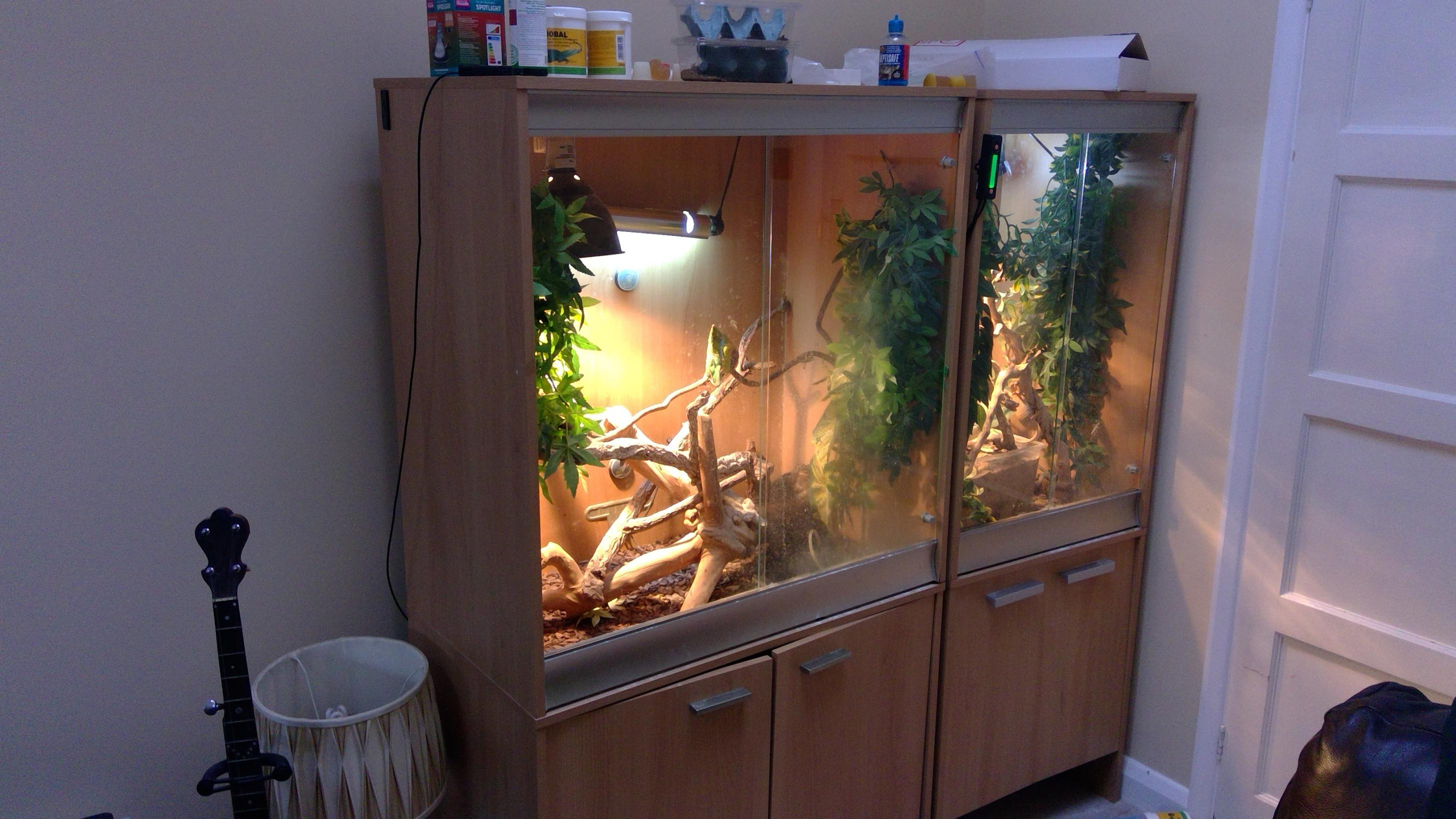 Pair of Panther Chameleons for sale, comeplete setups-win_20171212_14_48_15_pro.jpg