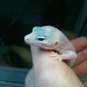 Male Baby Blizzard Eclipse
