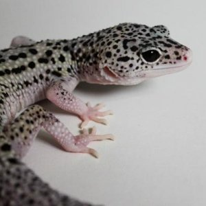 Minnie (Blackhole het Tremper)