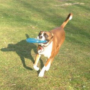 Punch with frisbee!