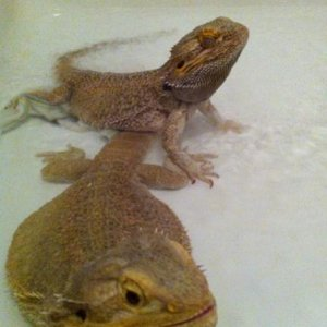 Oska and Hoshi in the shower