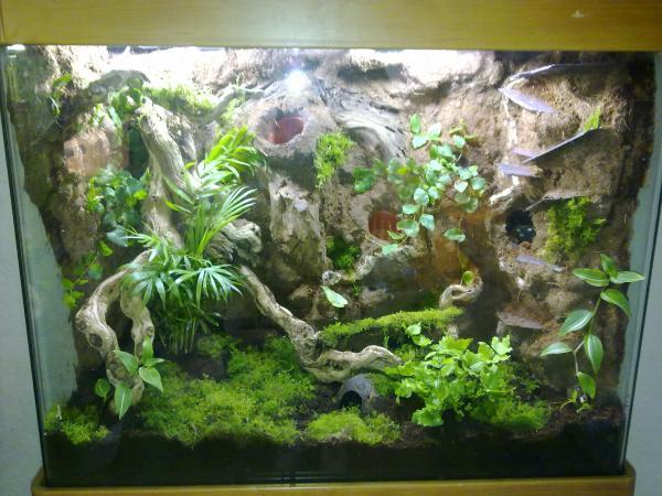 Dart Frog Tank Build Reptile Forums