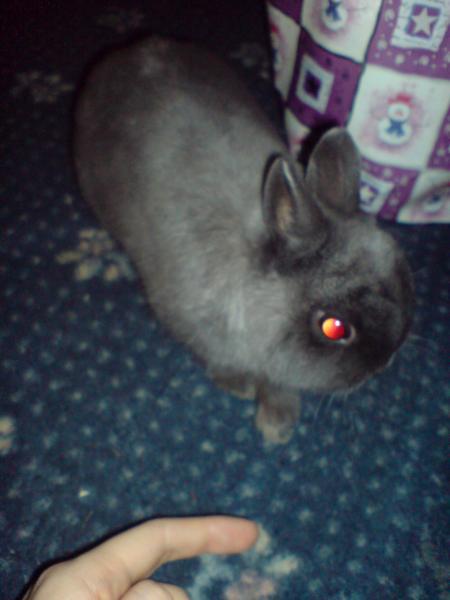 Alex my dwarf rabbit