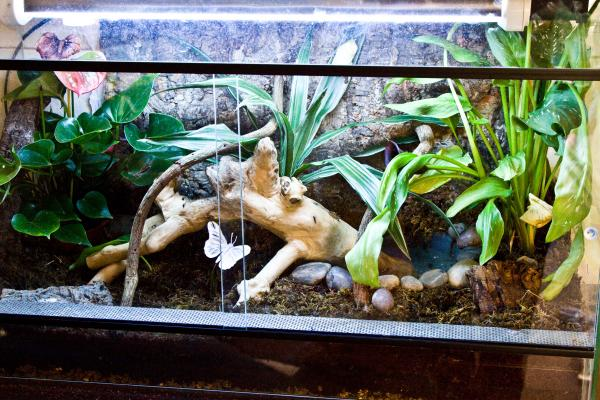 Post Pics Of Your Frog Rooms Page 4 Reptile Forums