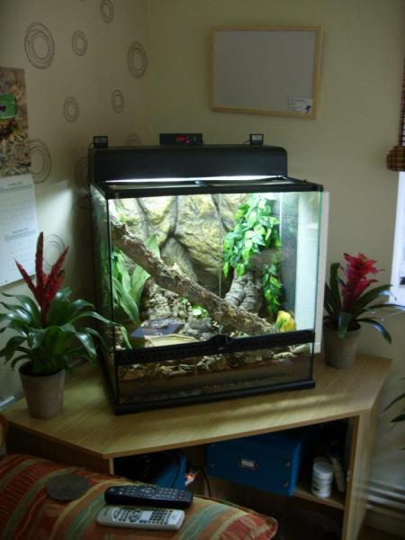 White Tree Frog Terrarium Reptile Forums